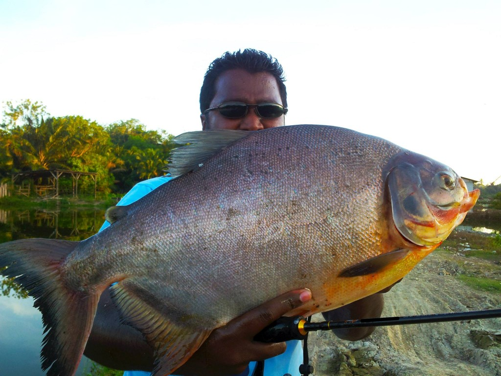 pacu-3.6kg on ultralight