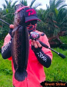 Lai Malie menunjukkan ikan bujuk yang sangat menarik menggunakan soft plastic