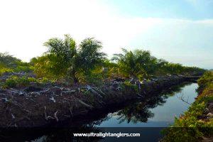 kawasan-kelapa-sawit-ikan-bujuk
