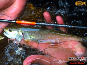 sikang-on-grenti-strike-sengat-ultralight-rod