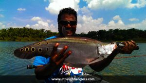 ikan-belida-clown-fish-with-ultralight-setup