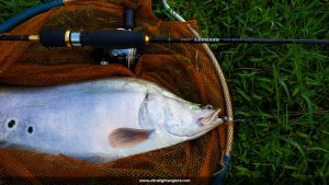 komander-lemon-tea-ultralight-fishing-kanicen-nix-softbaits-leebass