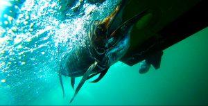 kanicen-nix-layaran-ultralight-fishing-underwater-shot