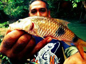 ikan-sebarau-dua-jalus-hampala-double-stripe-kanicen-nix-sailang-red-eye