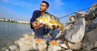 wawan-peacock-bass-kanicen-nix-sailang-grenti-strike-soft-plastic