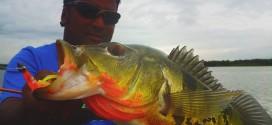 Peacock-Bass-Sutun-Kanicen-2