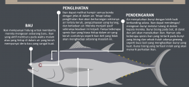 Apa-yang-anda-perlu-tahu-tentang-deria-pada-ikan-kanicen-nix-ultralight-fishing