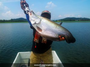 ikan-belida-clown-fish-with-medium-rod-setup-sidek
