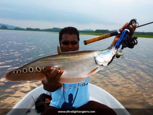 ikan-belida-clown-fish-with-ultralight-kanicen-nix-ultralight-rod-setup
