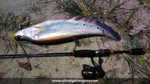 ikan-belida-clown-fish-with-ultralight-kanicen-nix-ultralight-rod-setup-soft-plastic-onie-kurnia