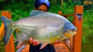 pink-vengers-strike-pacu-ultralight-fishing