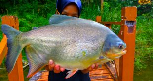 pink-vengers-strike-pacu-ultralight-fishing