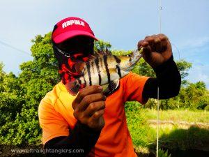 kanicen-nix-softbaits-tiger-fish