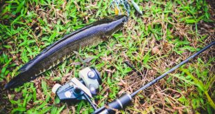 trip memancing ikan haruan