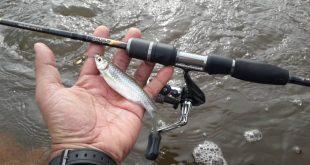 Teknik Jika Rig Untuk Memikat Haruan Culas Ultralight Fishing