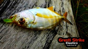 Grenti Strike - Elastico